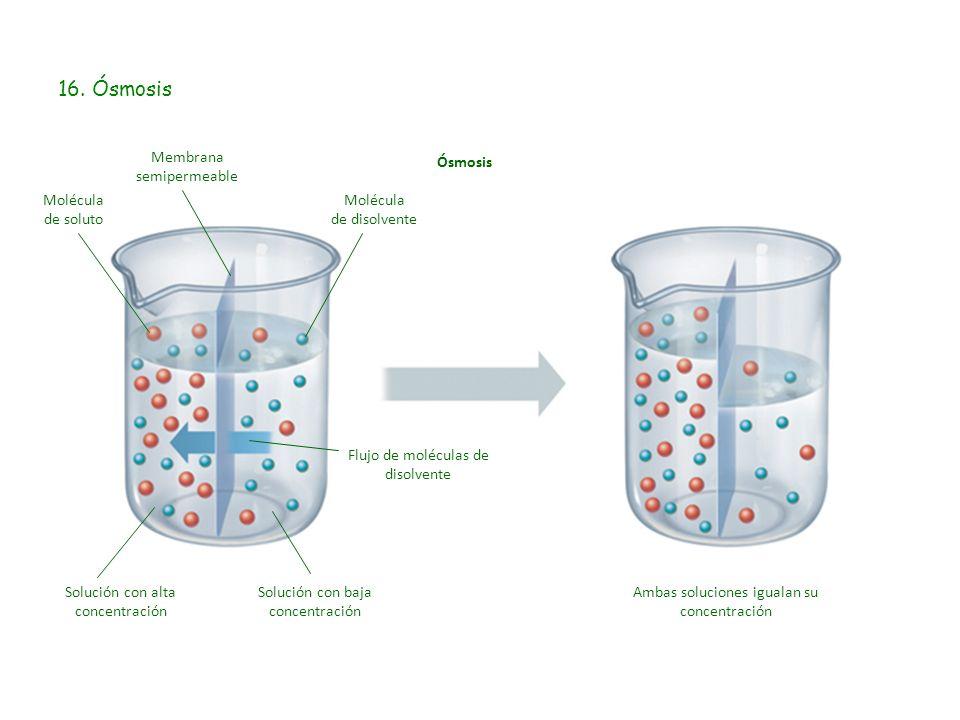 16. Ósmosis Ósmosis Membrana semipermeable Molécula de disolvente Molécula de soluto Solución con alta concentración Solución con baja concentración A