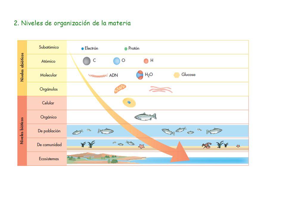 2. Niveles de organización de la materia