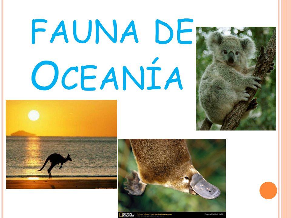 A USTRALIA En Australia existen gran cantidad de animales endémicos, por ejemplo: Lobo de Tasmania Canguro Koala Subepalos australiano Pingüinos azules Cucaburra Emú Dingo