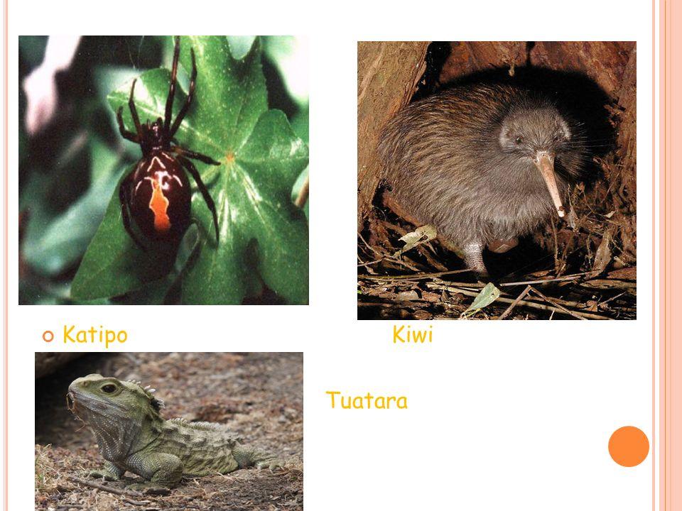 P APÚA N UEVA G UINEA La fauna es abundante y variada como: Canguro del árbol El ualabí El jabalí El dingo Ardillas Ratas Murciélagos Ratones Mariposas Aves tropicales