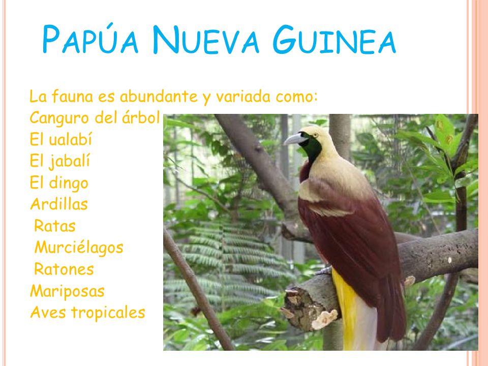 Mariposa Alas de Pájaro Canguro de Árbol Ualabí