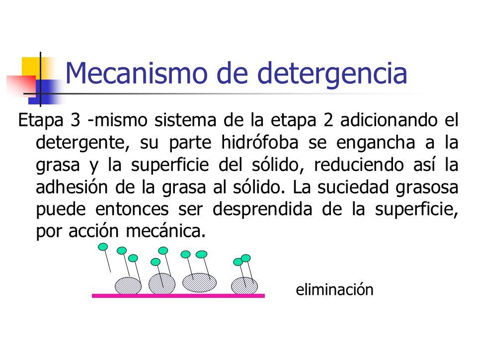 Mecanismo de detergencia Etapa 3 -mismo sistema de la etapa 2 adicionando el detergente, su parte hidrófoba se engancha a la grasa y la superficie del