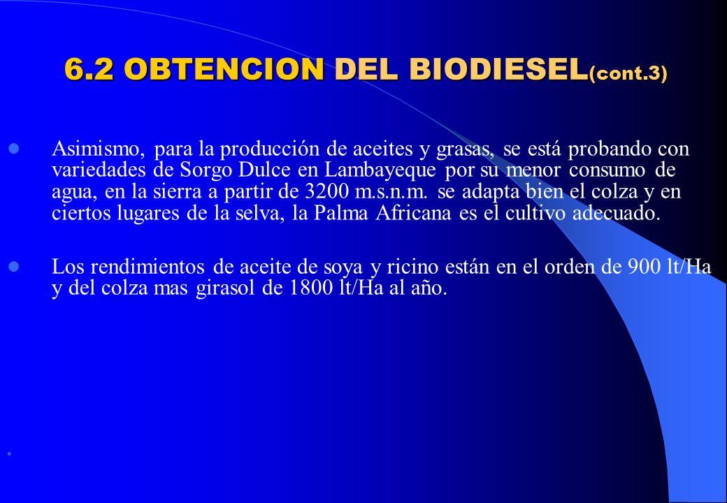 6.2 OBTENCION DEL BIODIESEL (cont.3) Asimismo, para la producción de aceites y grasas, se está probando con variedades de Sorgo Dulce en Lambayeque po