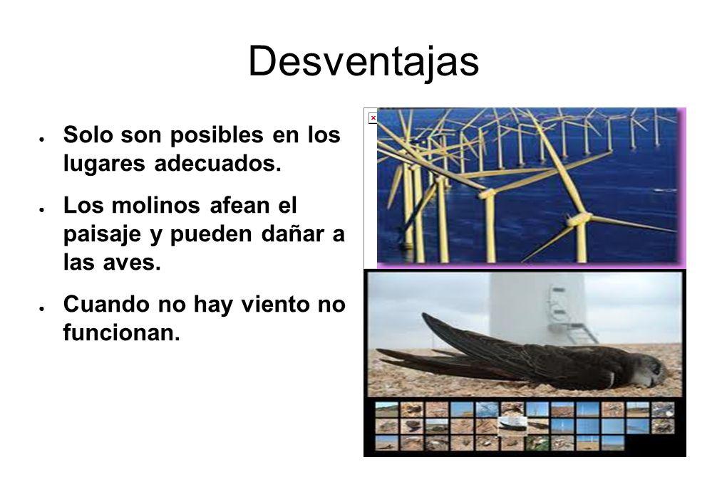 Desventajas Solo son posibles en los lugares adecuados. Los molinos afean el paisaje y pueden dañar a las aves. Cuando no hay viento no funcionan.