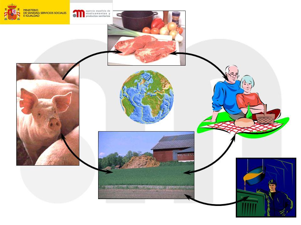 PROGRAMA DE ANIMALES ENFERMOS Nº DE CEPAS DE E.