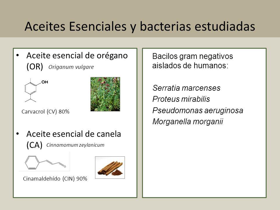 Aceites Esenciales y bacterias estudiadas Aceite esencial de orégano (OR) Aceite esencial de canela (CA) Bacilos gram negativos aislados de humanos: S