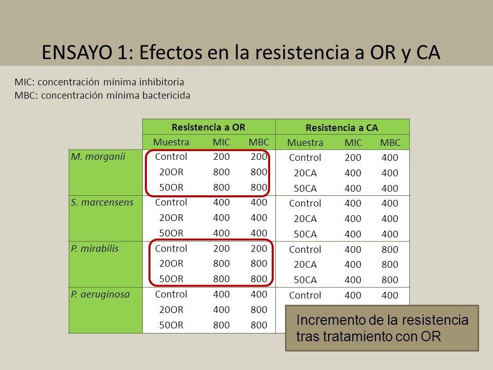Resistencia a OR Resistencia a CA MuestraMICMBC MuestraMICMBC M. morganiiControl200 Control200400 20OR800 20CA400 50OR800 50CA400 S. marcensensControl