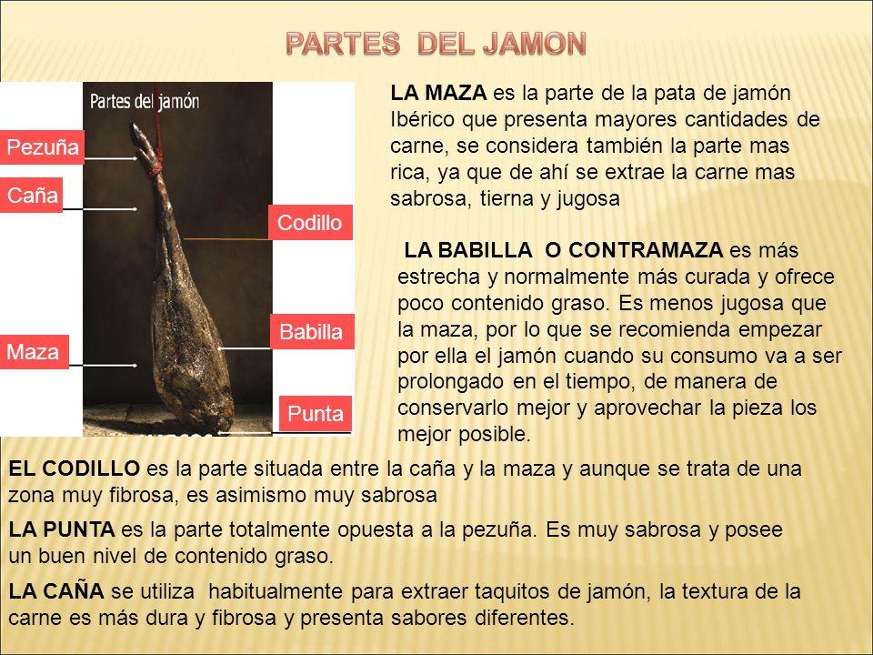LA MAZA es la parte de la pata de jamón Ibérico que presenta mayores cantidades de carne, se considera también la parte mas rica, ya que de ahí se ext