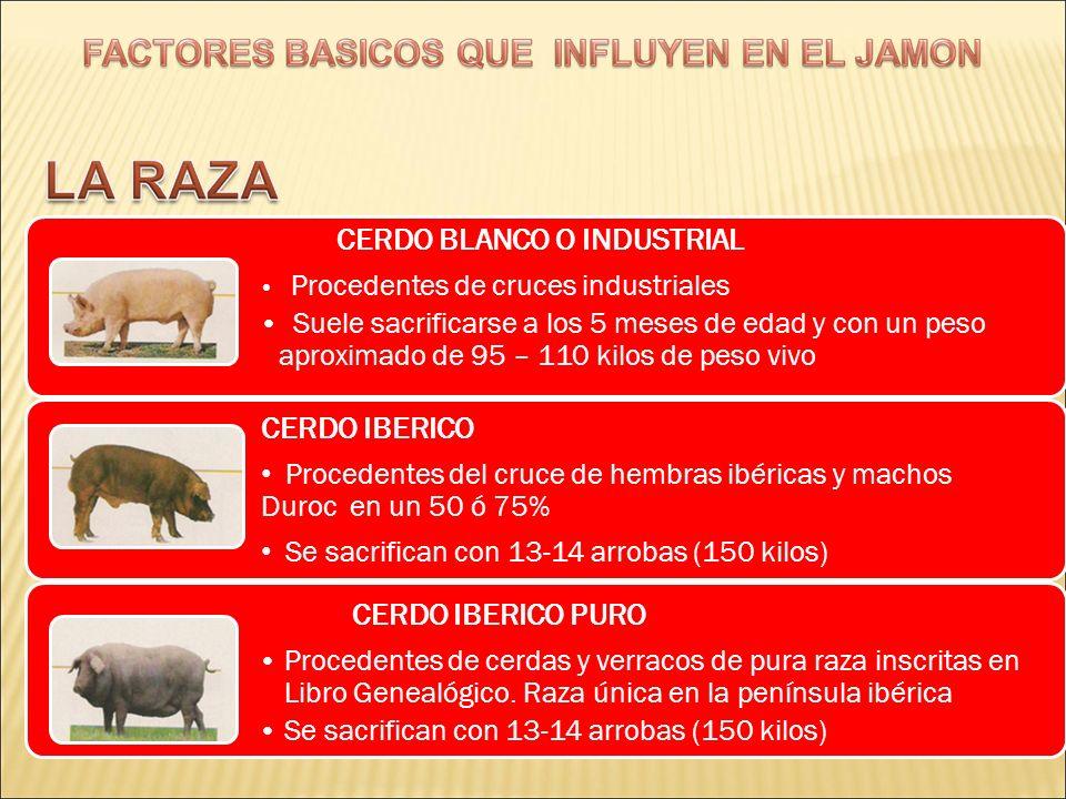 BELLOTA CERDOS IBERICOS.-Es la alimentación ideal tanto para cerdos ibéricos como para ibéricos puros.