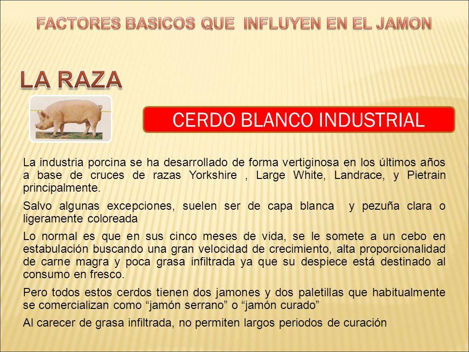 CERDO BLANCO INDUSTRIAL La industria porcina se ha desarrollado de forma vertiginosa en los últimos años a base de cruces de razas Yorkshire, Large Wh