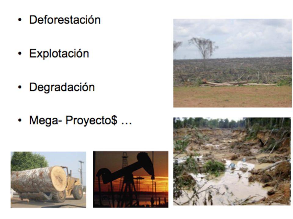 Deforestación Explotación Degradación Mega- Proyecto$ …