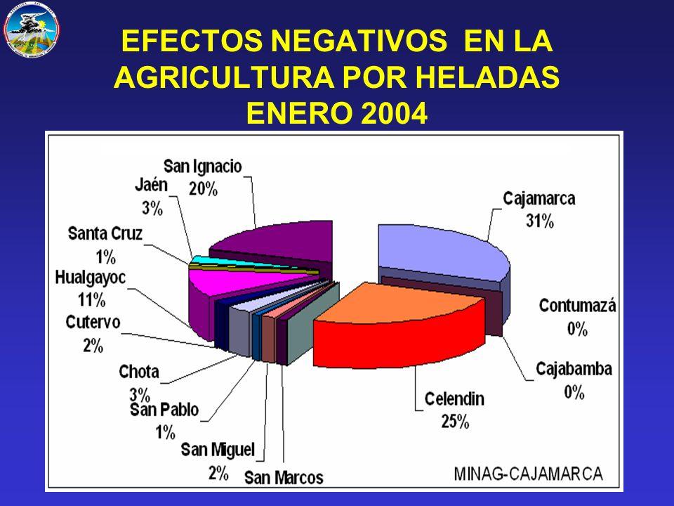 EFECTOS NEGATIVOS EN LA AGRICULTURA POR HELADAS ENERO 2004