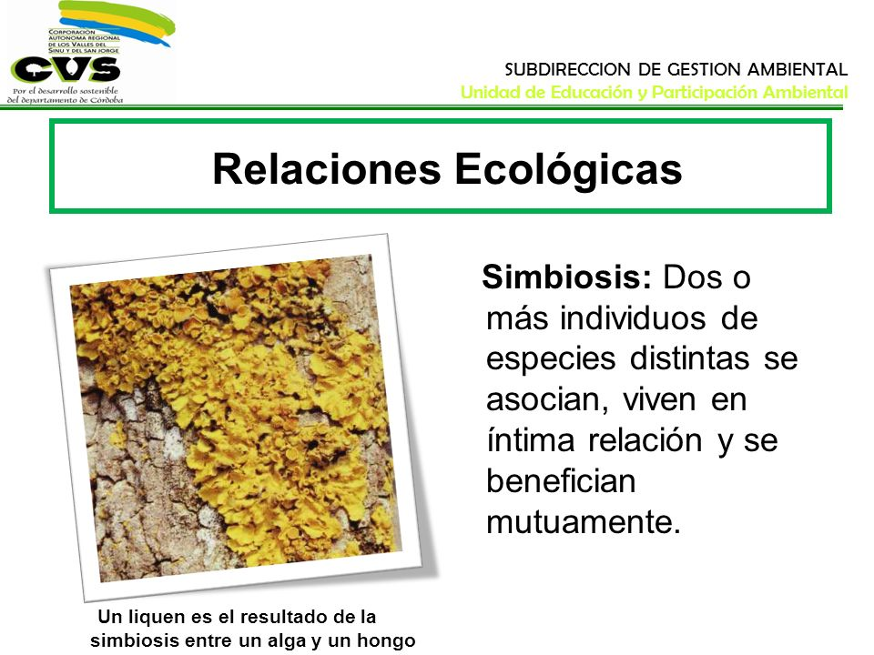 SUBDIRECCION DE GESTION AMBIENTAL Unidad de Educación y Participación Ambiental Relaciones Ecológicas Simbiosis: Dos o más individuos de especies dist