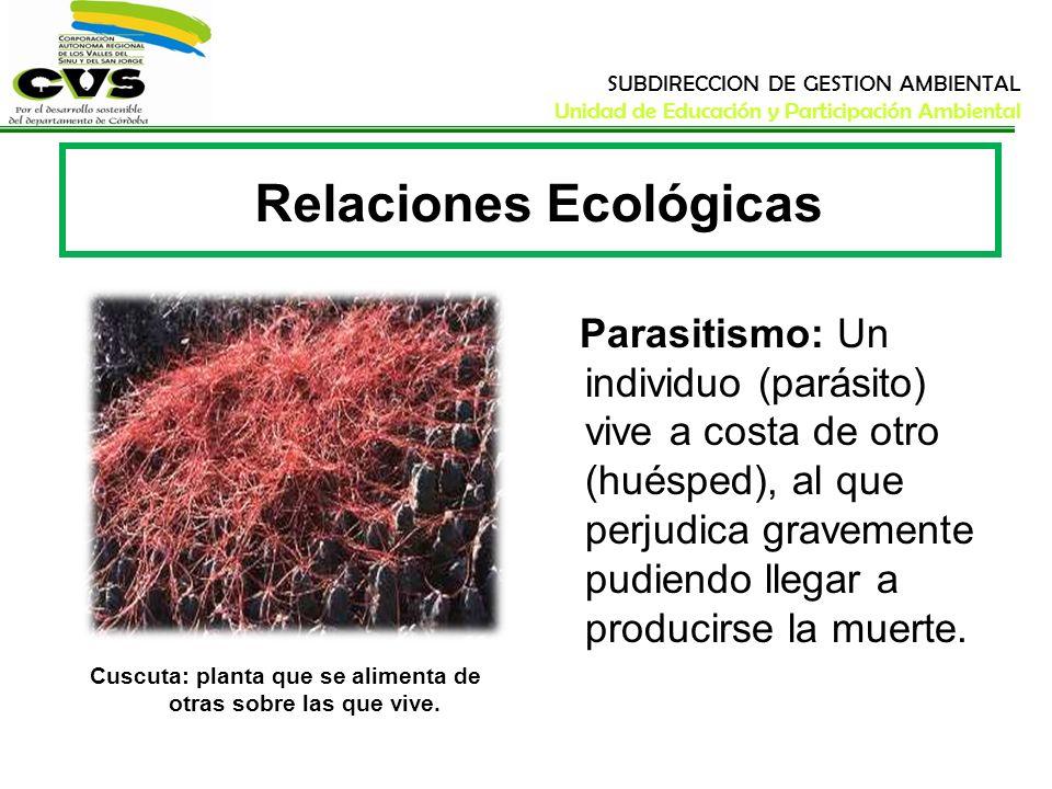 SUBDIRECCION DE GESTION AMBIENTAL Unidad de Educación y Participación Ambiental Relaciones Ecológicas Parasitismo: Un individuo (parásito) vive a cost