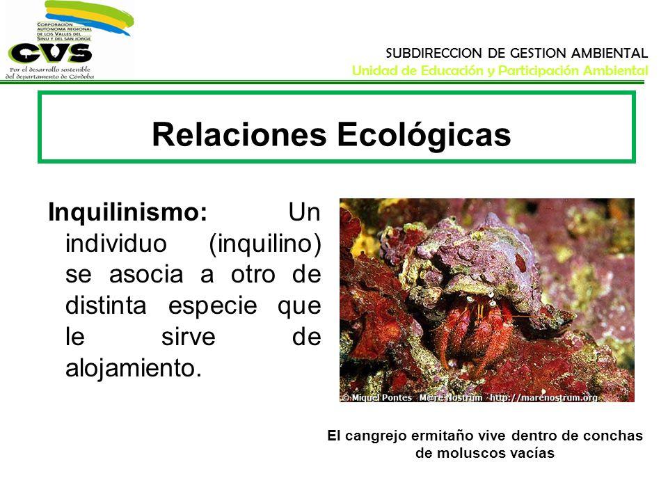 SUBDIRECCION DE GESTION AMBIENTAL Unidad de Educación y Participación Ambiental Relaciones Ecológicas Inquilinismo: Un individuo (inquilino) se asocia