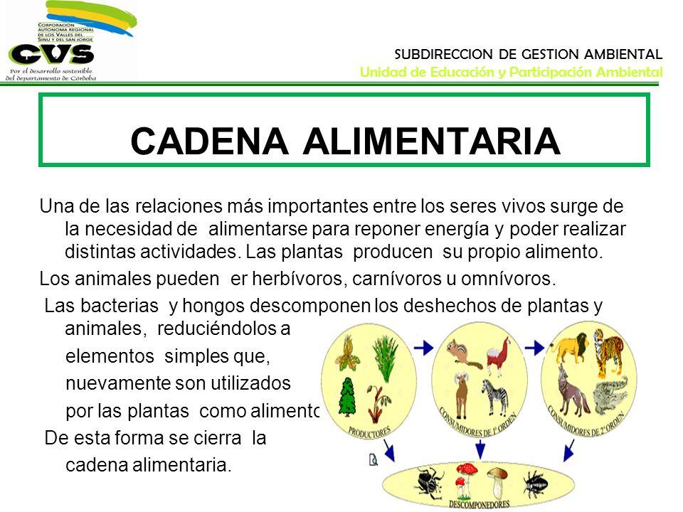 SUBDIRECCION DE GESTION AMBIENTAL Unidad de Educación y Participación Ambiental CADENA ALIMENTARIA Una de las relaciones más importantes entre los ser
