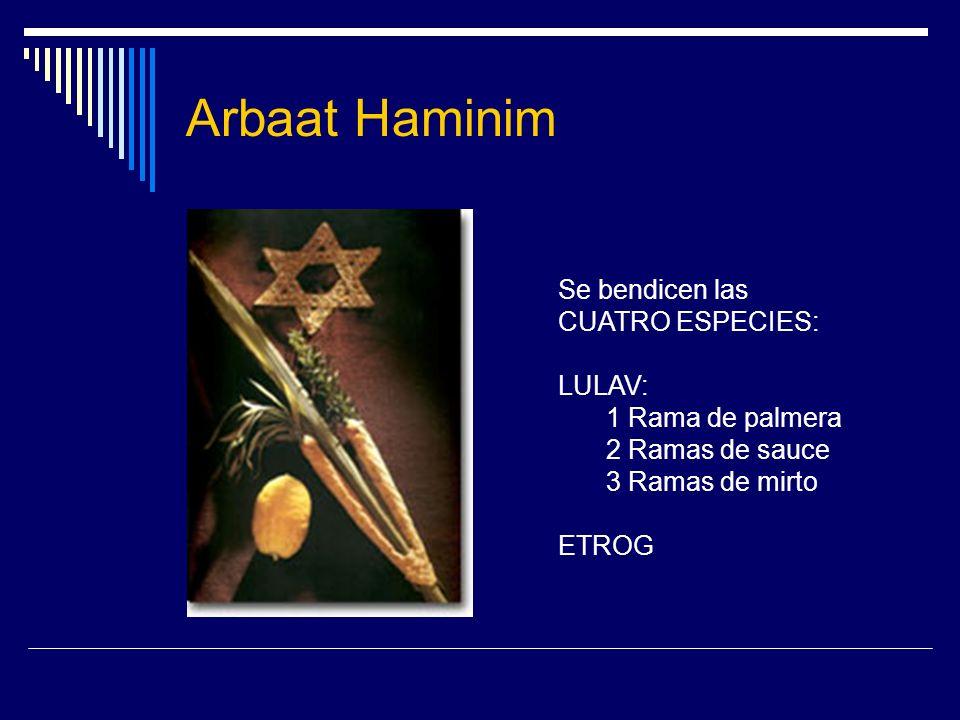 Arbaat Haminim Se bendicen las CUATRO ESPECIES: LULAV: 1 Rama de palmera 2 Ramas de sauce 3 Ramas de mirto ETROG