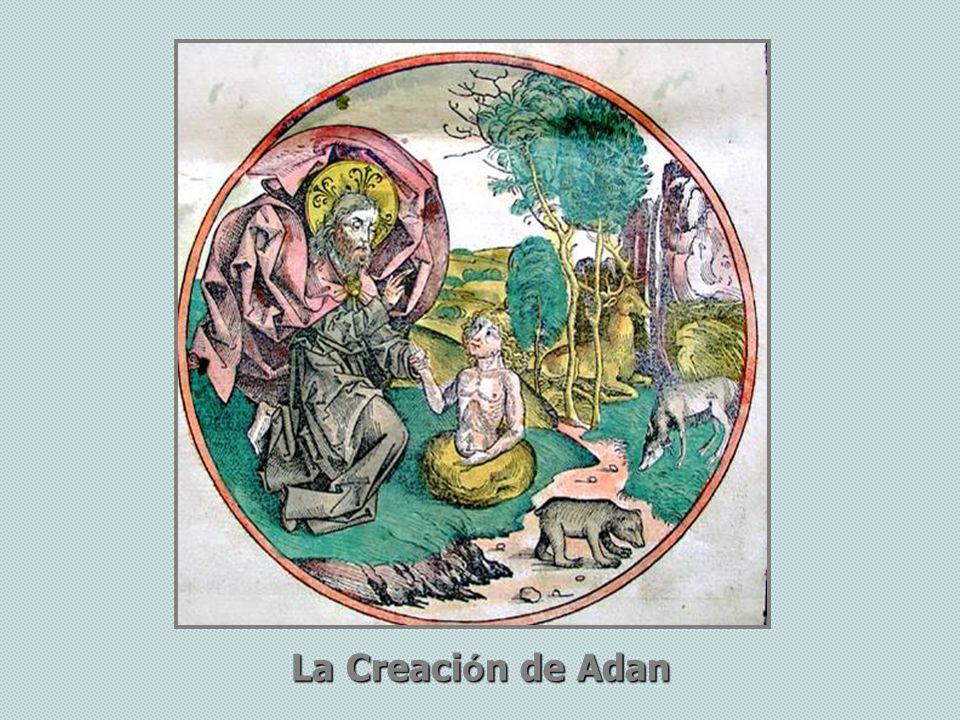 La Creaci ó n de Adan