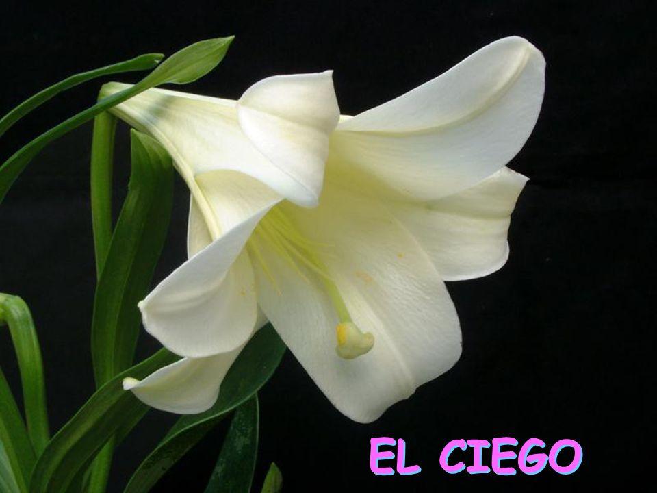 EL CIEGO