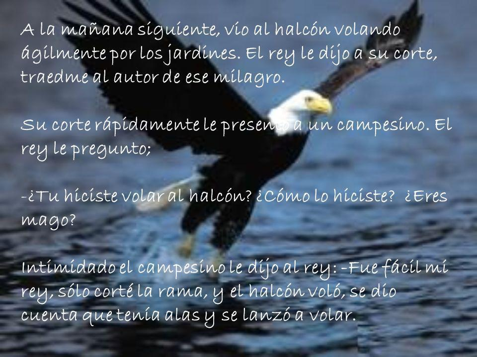 A la mañana siguiente, vio al halcón volando ágilmente por los jardines.