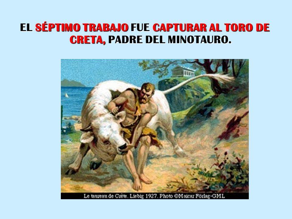 EL SÉPTIMO TRABAJO FUE CAPTURAR AL TORO DE CRETA, PADRE DEL MINOTAURO.