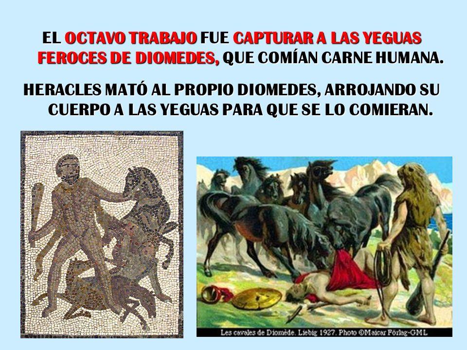 EL OCTAVO TRABAJO FUE CAPTURAR A LAS YEGUAS FEROCES DE DIOMEDES, QUE COMÍAN CARNE HUMANA. HERACLES MATÓ AL PROPIO DIOMEDES, ARROJANDO SU CUERPO A LAS