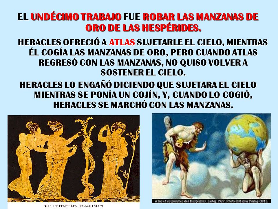 EL UNDÉCIMO TRABAJO FUE ROBAR LAS MANZANAS DE ORO DE LAS HESPÉRIDES. HERACLES OFRECIÓ A ATLAS SUJETARLE EL CIELO, MIENTRAS ÉL COGÍA LAS MANZANAS DE OR