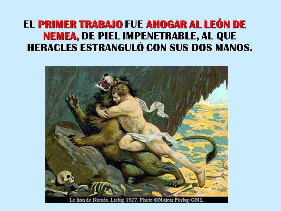 EL PRIMER TRABAJO FUE AHOGAR AL LEÓN DE NEMEA, DE PIEL IMPENETRABLE, AL QUE HERACLES ESTRANGULÓ CON SUS DOS MANOS.