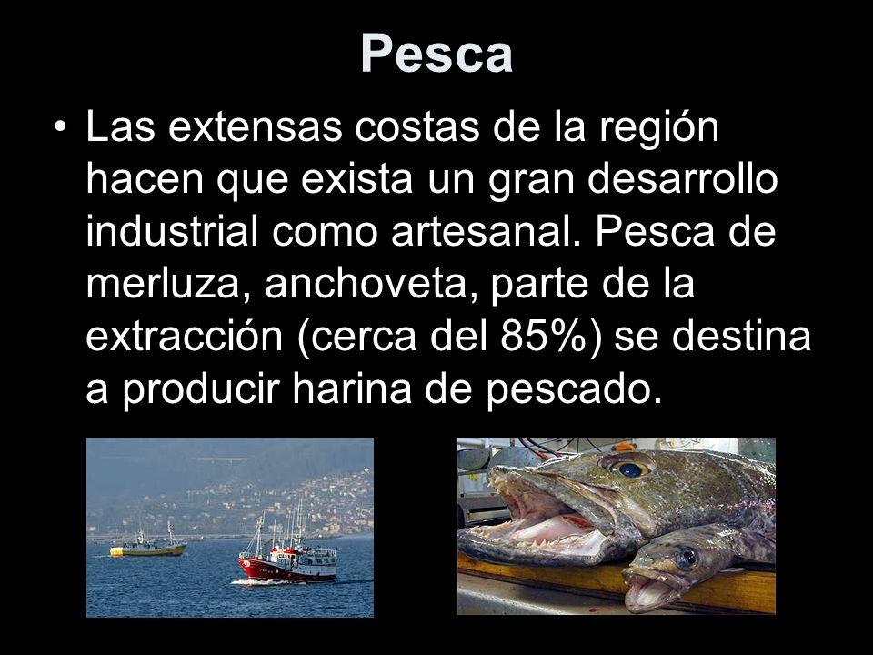 Pesca Las extensas costas de la región hacen que exista un gran desarrollo industrial como artesanal. Pesca de merluza, anchoveta, parte de la extracc