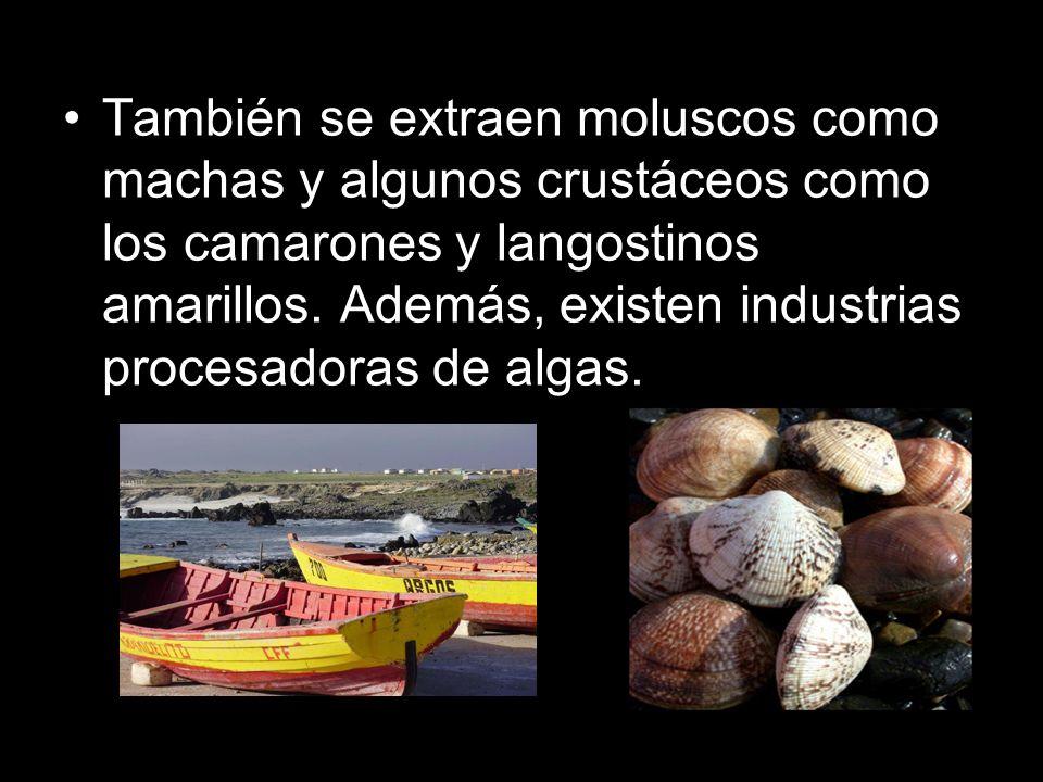 También se extraen moluscos como machas y algunos crustáceos como los camarones y langostinos amarillos. Además, existen industrias procesadoras de al