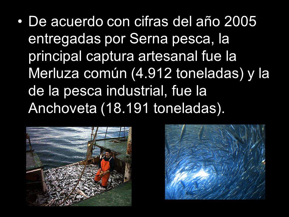 De acuerdo con cifras del año 2005 entregadas por Serna pesca, la principal captura artesanal fue la Merluza común (4.912 toneladas) y la de la pesca