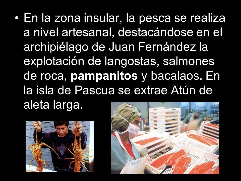 En la zona insular, la pesca se realiza a nivel artesanal, destacándose en el archipiélago de Juan Fernández la explotación de langostas, salmones de