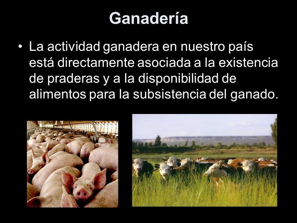 Ganadería La actividad ganadera en nuestro país está directamente asociada a la existencia de praderas y a la disponibilidad de alimentos para la subs