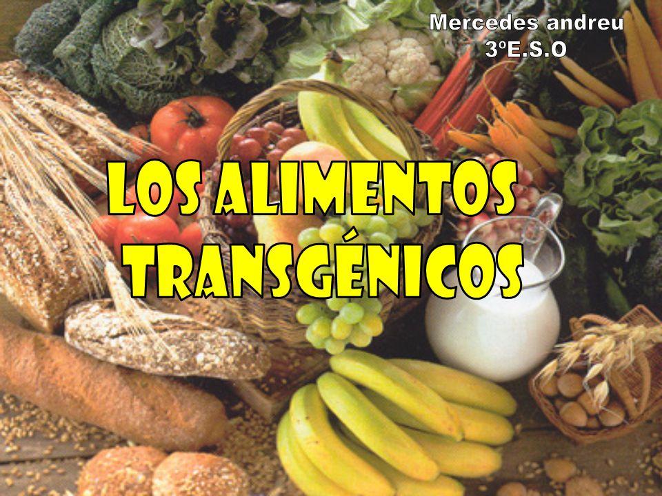 Un alimento transgénico es aquel obtenido a partir de un organismo modificado por ingeniería genética.