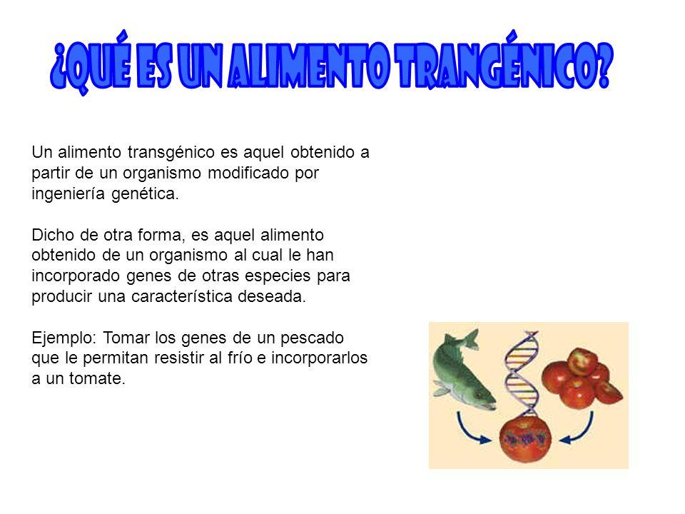 Un alimento transgénico es aquel obtenido a partir de un organismo modificado por ingeniería genética. Dicho de otra forma, es aquel alimento obtenido