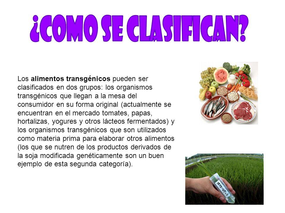 Los alimentos transgénicos pueden ser clasificados en dos grupos: los organismos transgénicos que llegan a la mesa del consumidor en su forma original