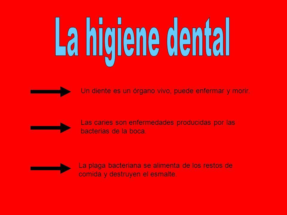 Un diente es un órgano vivo, puede enfermar y morir. Las caries son enfermedades producidas por las bacterias de la boca. La plaga bacteriana se alime