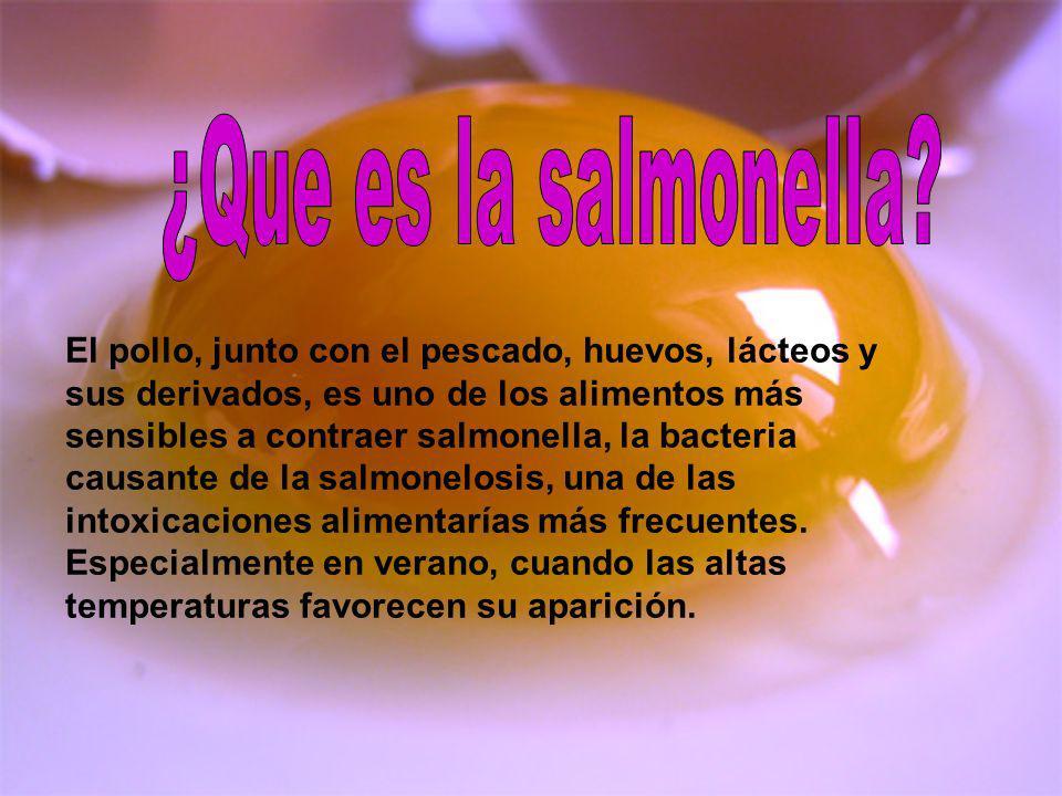 El pollo, junto con el pescado, huevos, lácteos y sus derivados, es uno de los alimentos más sensibles a contraer salmonella, la bacteria causante de
