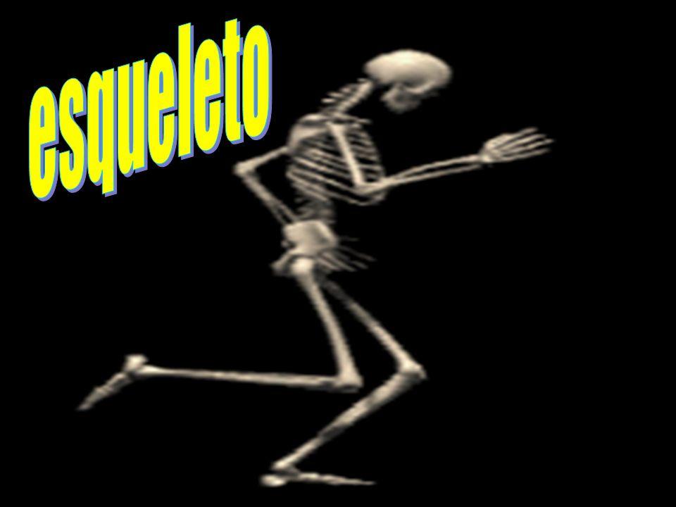 Todas las personas tienen un esqueleto compuesto por muchos huesos.