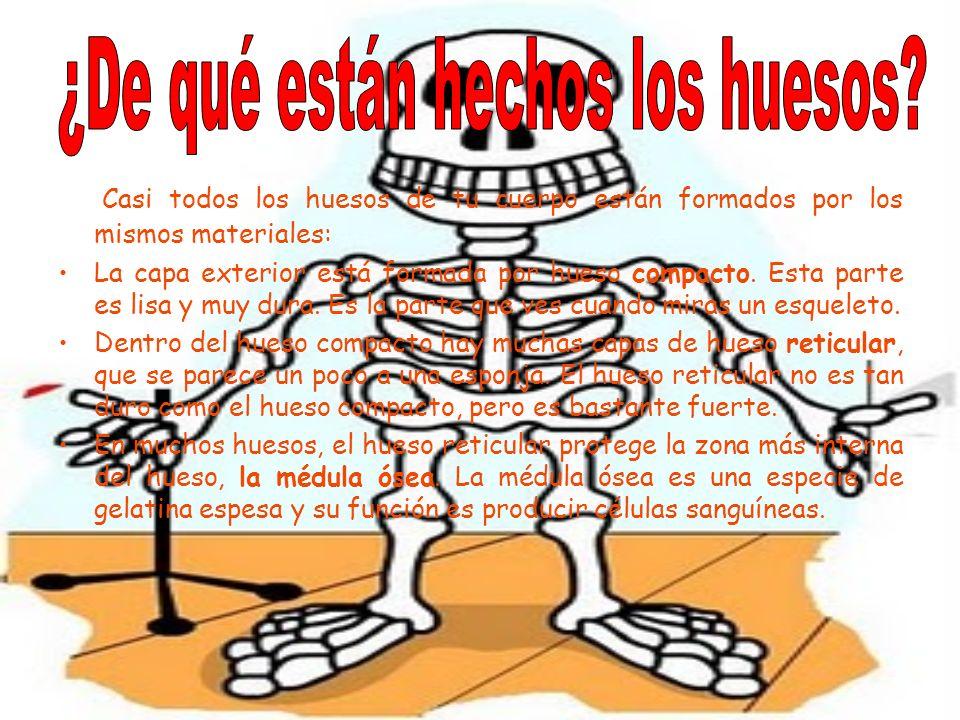Casi todos los huesos de tu cuerpo están formados por los mismos materiales: La capa exterior está formada por hueso compacto. Esta parte es lisa y mu
