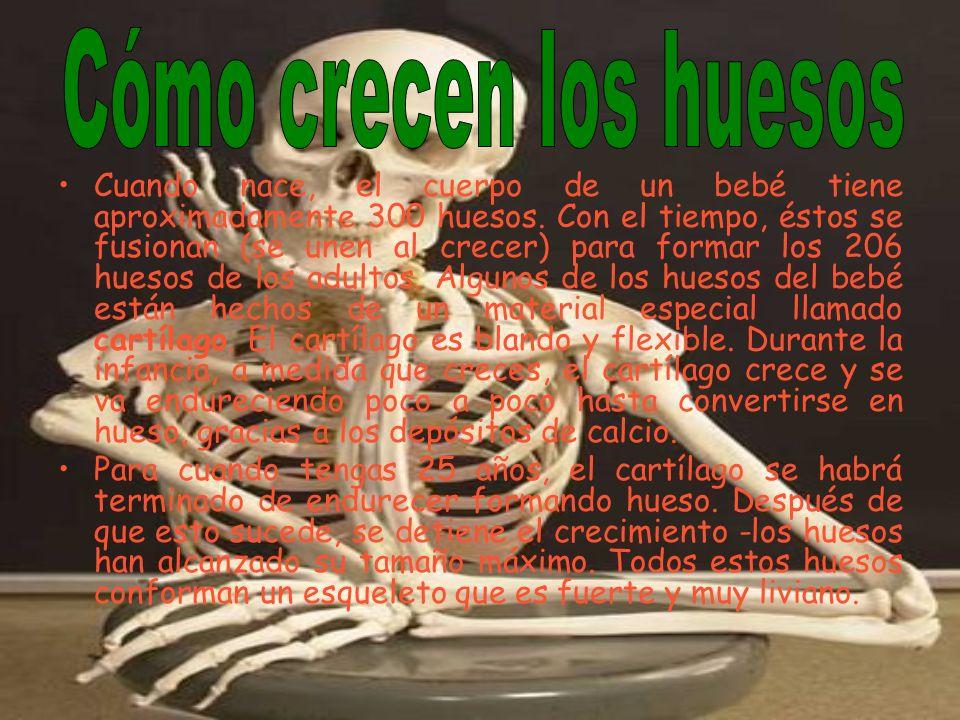 Cuando nace, el cuerpo de un bebé tiene aproximadamente 300 huesos. Con el tiempo, éstos se fusionan (se unen al crecer) para formar los 206 huesos de