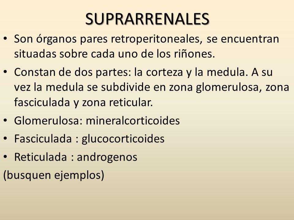 SUPRARRENALES Son órganos pares retroperitoneales, se encuentran situadas sobre cada uno de los riñones. Constan de dos partes: la corteza y la medula
