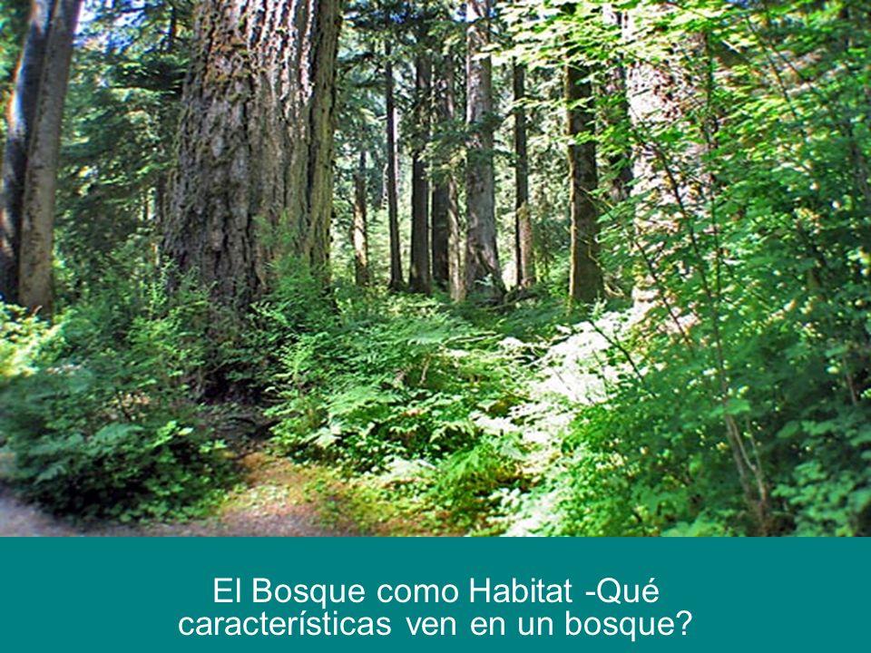 El Bosque como Habitat -Qué características ven en un bosque?