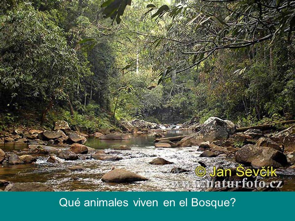 Qué animales viven en el Bosque?