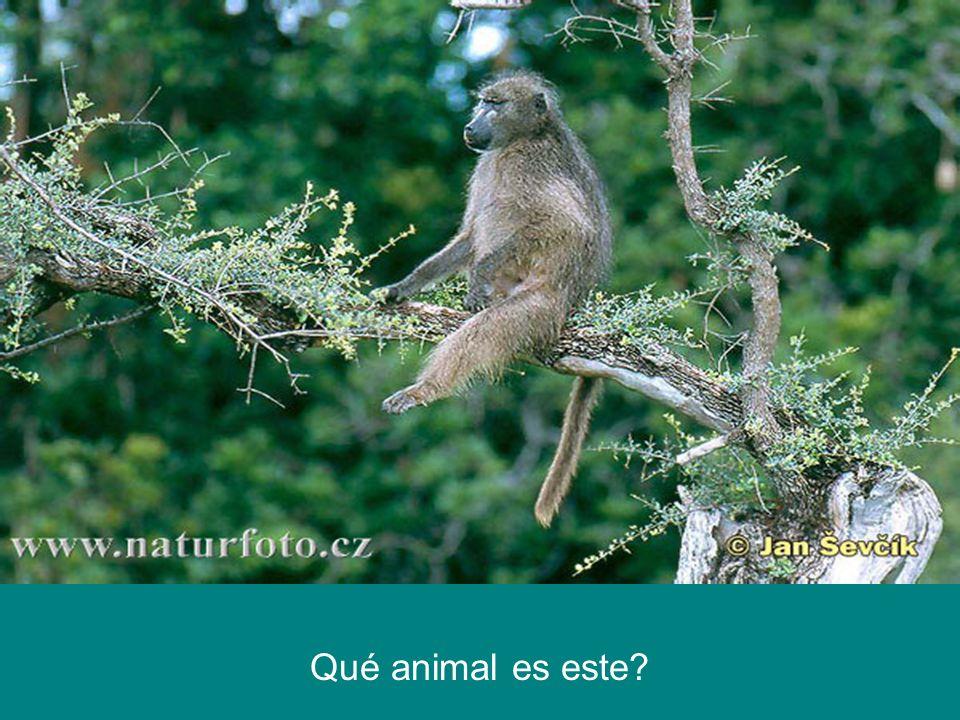 Qué animal es este?