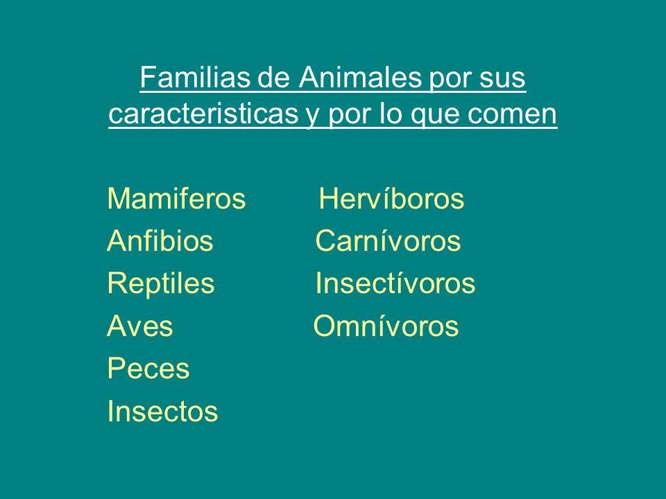 Familias de Animales por sus caracteristicas y por lo que comen Mamiferos Hervíboros Anfibios Carnívoros Reptiles Insectívoros Aves Omnívoros Peces In