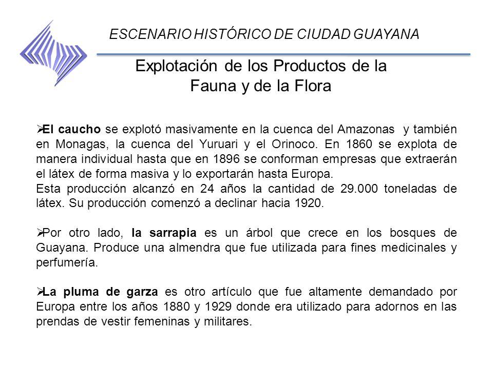 Explotación de los Productos de la Fauna y de la Flora ESCENARIO HISTÓRICO DE CIUDAD GUAYANA El caucho se explotó masivamente en la cuenca del Amazona