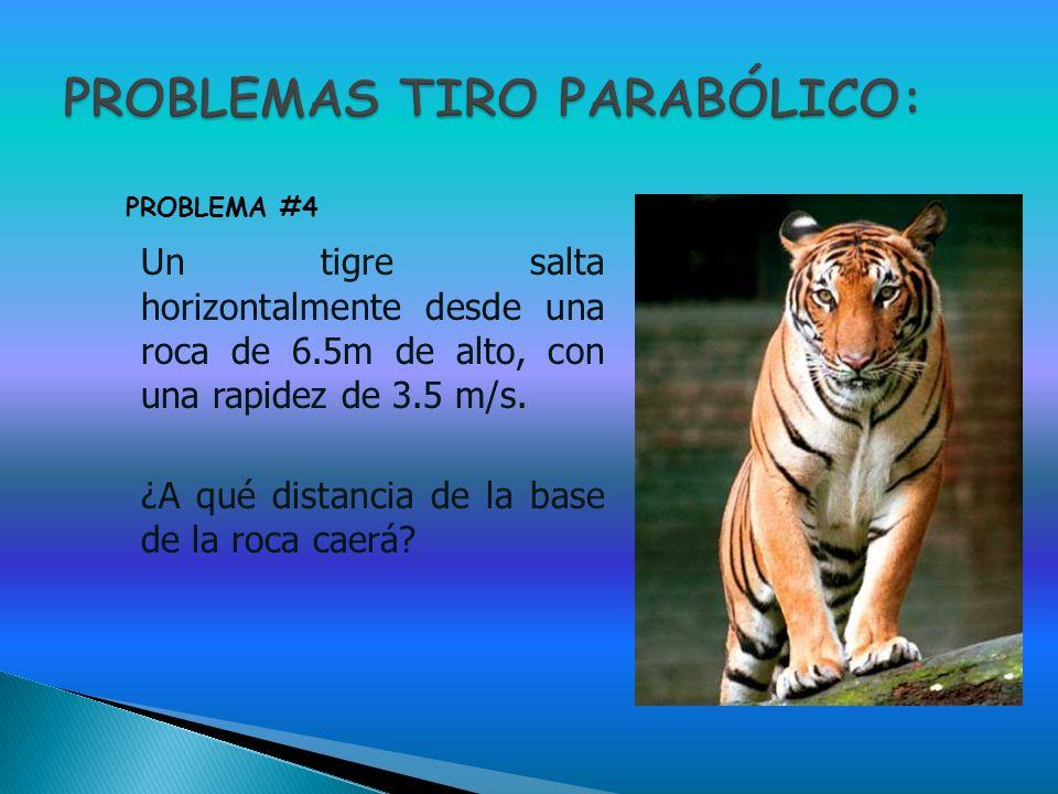 Un tigre salta horizontalmente desde una roca de 6.5m de alto, con una rapidez de 3.5 m/s. ¿A qué distancia de la base de la roca caerá? PROBLEMA #4