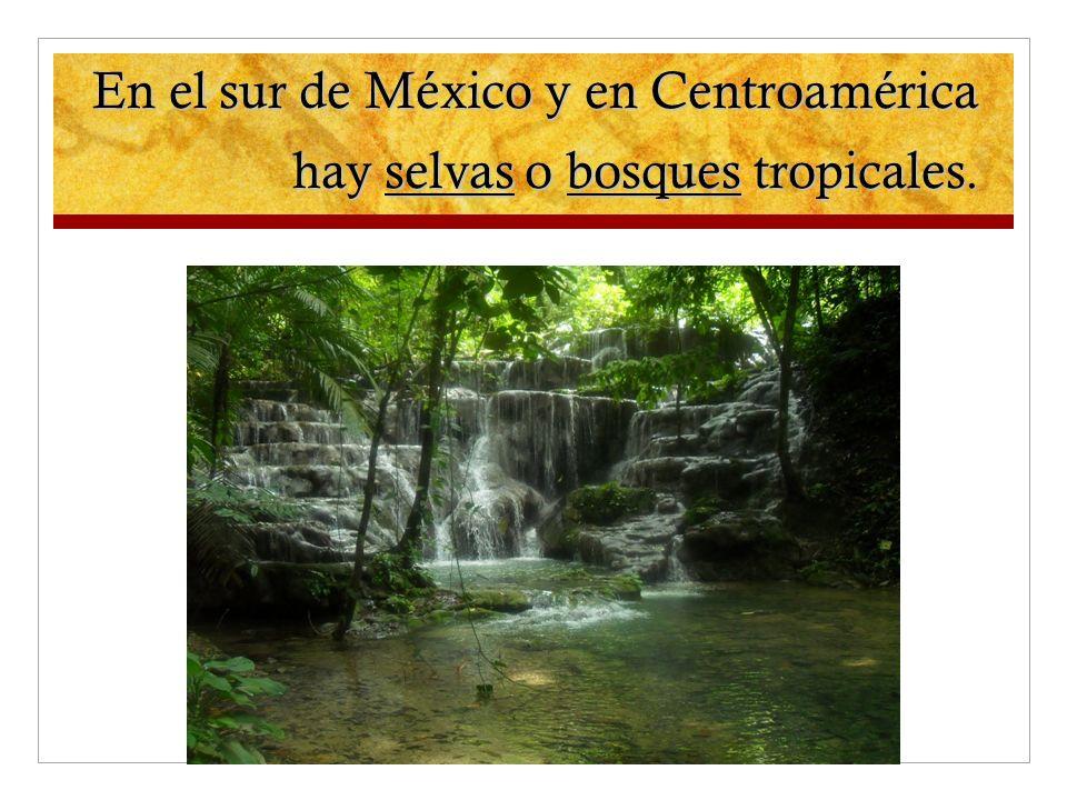 En el sur de México y en Centroamérica hay selvas o bosques tropicales.