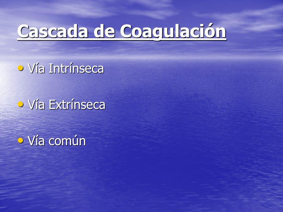 Cascada de Coagulación Vía Intrínseca Vía Intrínseca Vía Extrínseca Vía Extrínseca Vía común Vía común